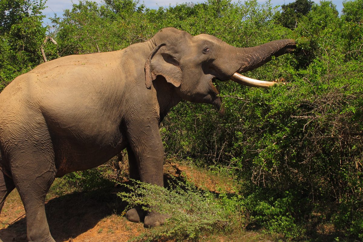 "<span class=""hot"">Hot <i class=""fa fa-bolt""></i></span> Wild Elephants & Bad Driving! The Highs And Lows Of Sri Lanka…"
