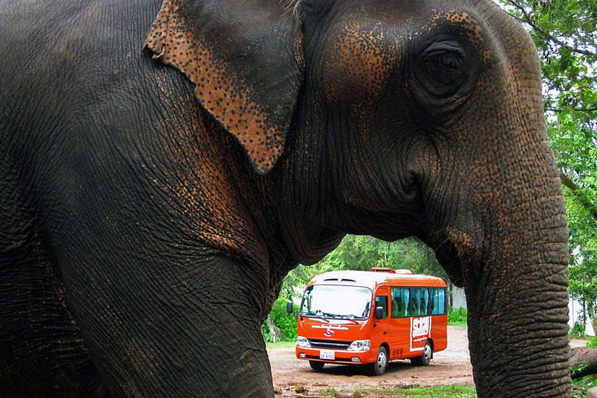 Newsflash! Hop-on Hop-off Bus Company Stray, Drive Onward into Vietnam!
