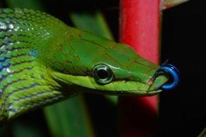 Snake at Taman Negara