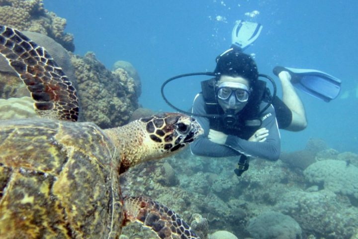 Learn to dive in Koh Tao, Thailand! (3-Day Open Water Diver Qualification)