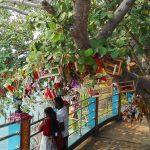 Black Tea and Burnt Feet, A Journey Across Sri Lanka