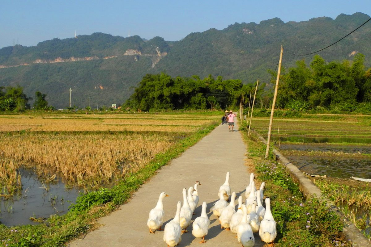 Experience the Mai Chau Valley, Vietnam (3 Day / 2 Night Homestay)