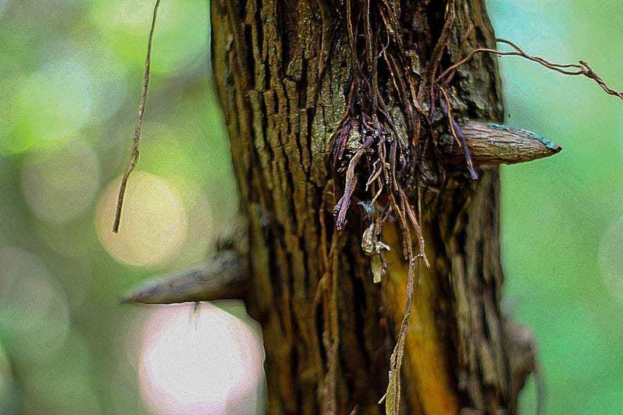 Spikes,-Cat Tien-National-Park,-Vietnam