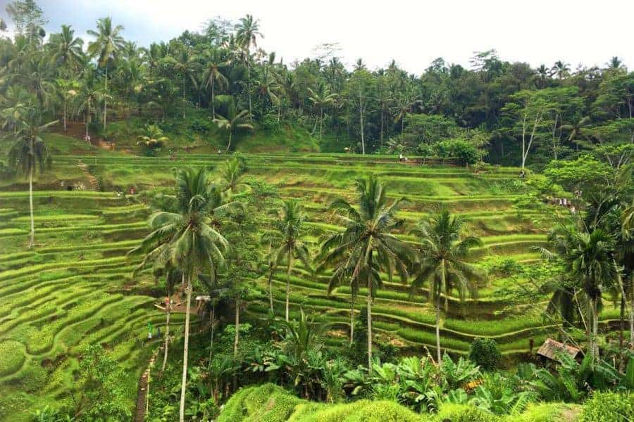 Rice fields -Depa-House-Ubud