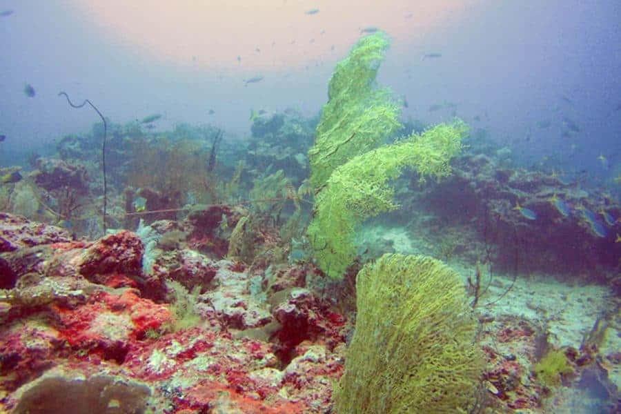 Dive School Pulau Kei