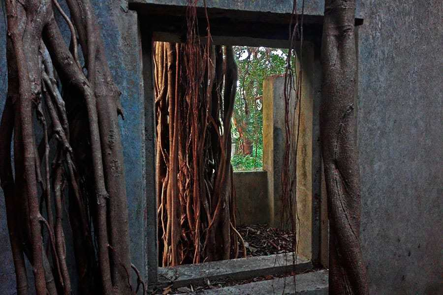 Banyan-trees-take-over-an-abandoned-building-at-Cabo-de-Rama-Fort-near-Agonda,-Goa,-India