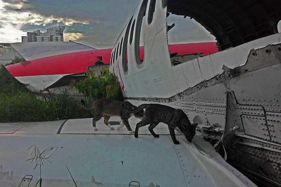 Cats-on-the-wing-of-a-small-plane-at-the-aeroplane-graveyard,-Bangkok,-Thailand
