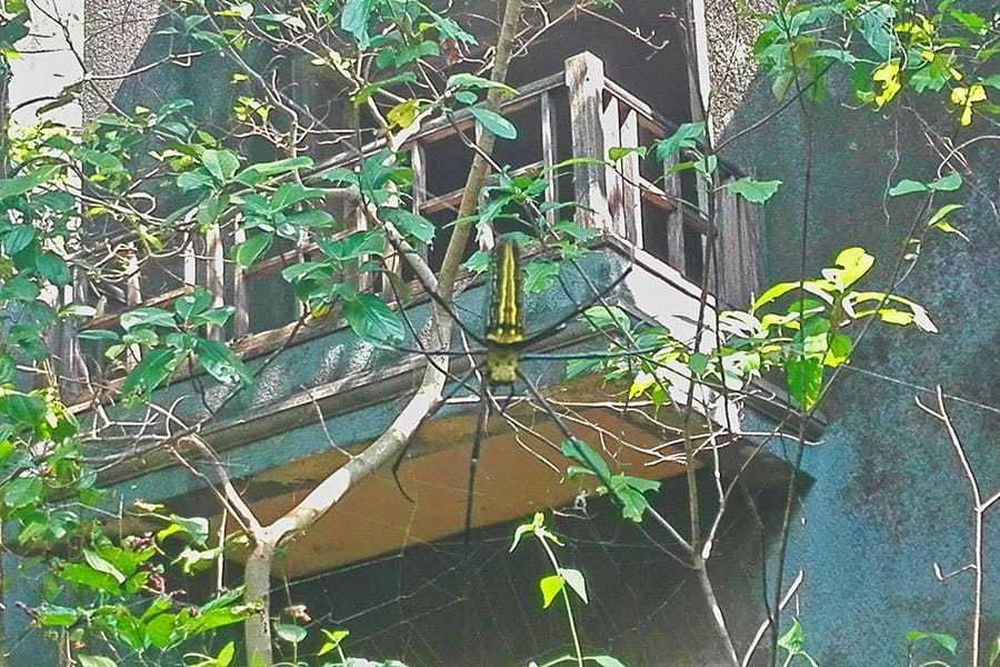 Spider-by-Ghost-Hotel-Agonda-Goa-India