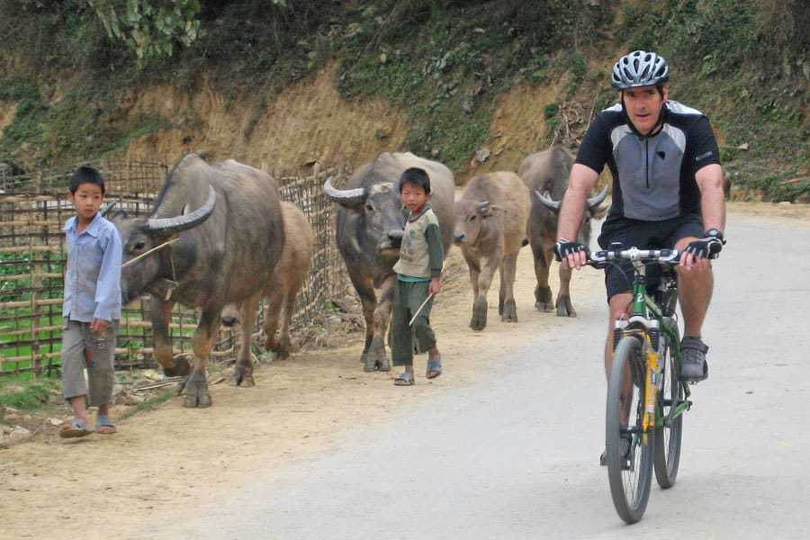 Cycling past buffalo on a bike tour of North Vietnam.