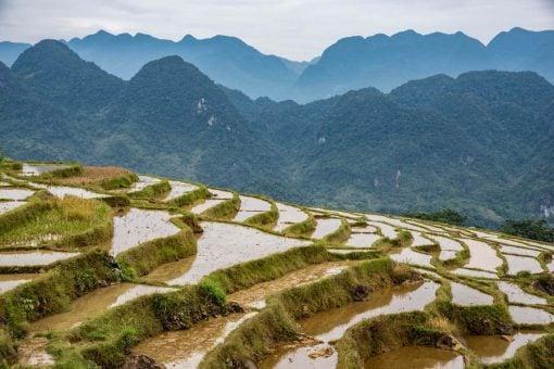 Rice fields of Mau Chau Valley, Vietnam.