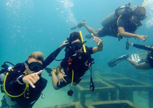 Diving an artificial reef with Roctopus in Koh Tao