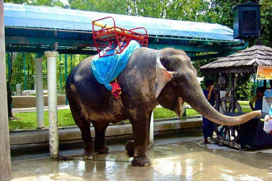 Elephant riding in Bangkok.