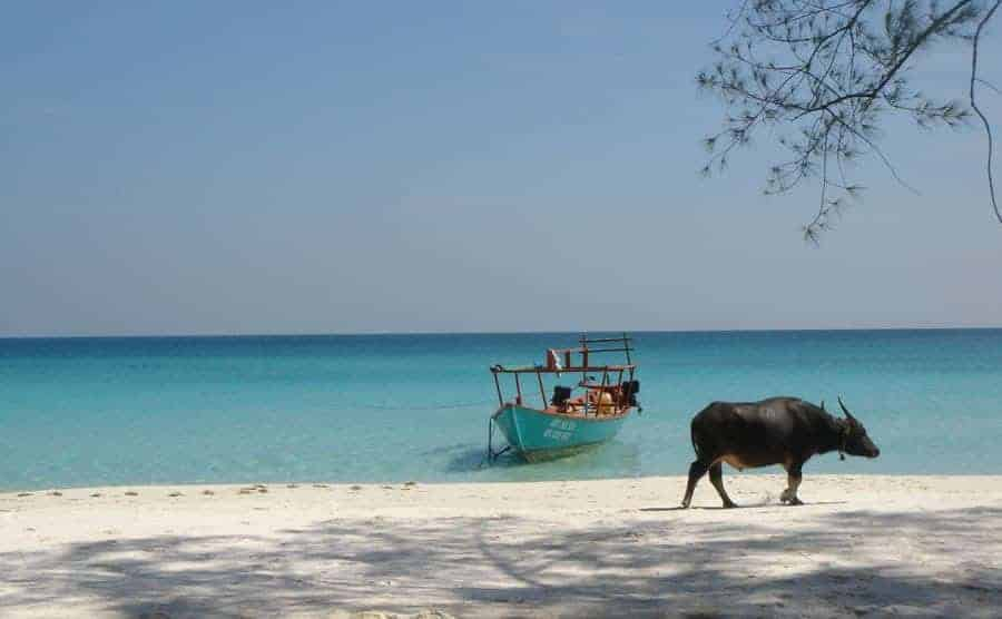 Buffalo and Boat, Koh Rong, Cambodia