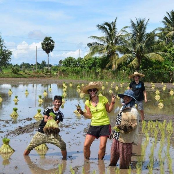 Kampot Rice Paddy Fields Butterfly Tours