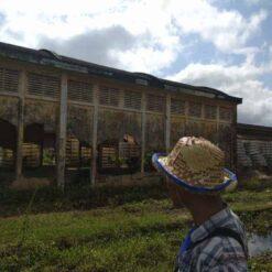 Battambang Colonial Buildings.