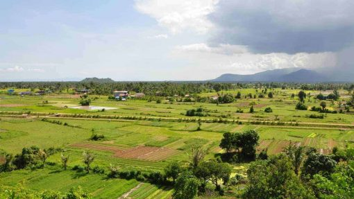 Kampot pepper plantations