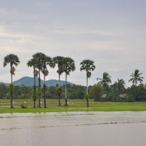 Rice-paddy-kampot-motor-adventures