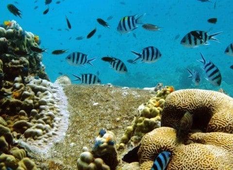 Roctopus SSI Master Diving-Koh-Tao underwater scene