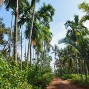 Back roads of Kampot, Cambodia