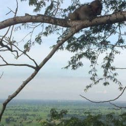 Bat Cave of Battambang Monkey