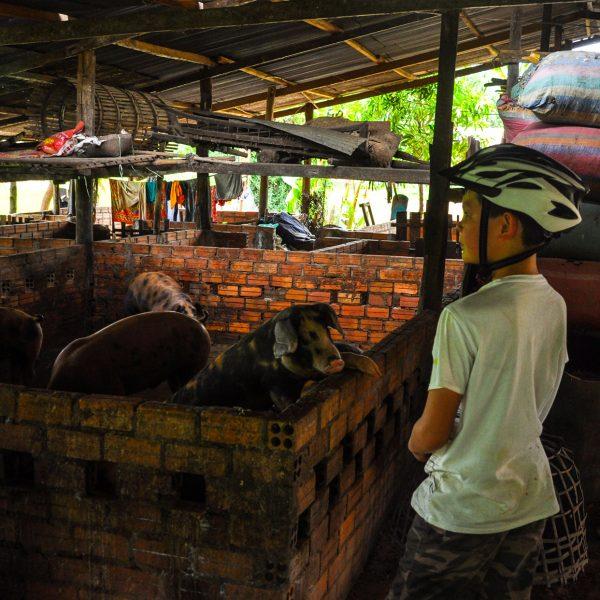 Bike Trip Butterfly Tours - Cambodia