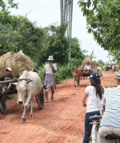 Triple-A-Cambodia Bicycle Tour