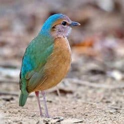 Bird Watching in Vietnam.