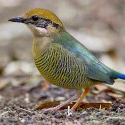 Bird Watching Tour in Vietnam.