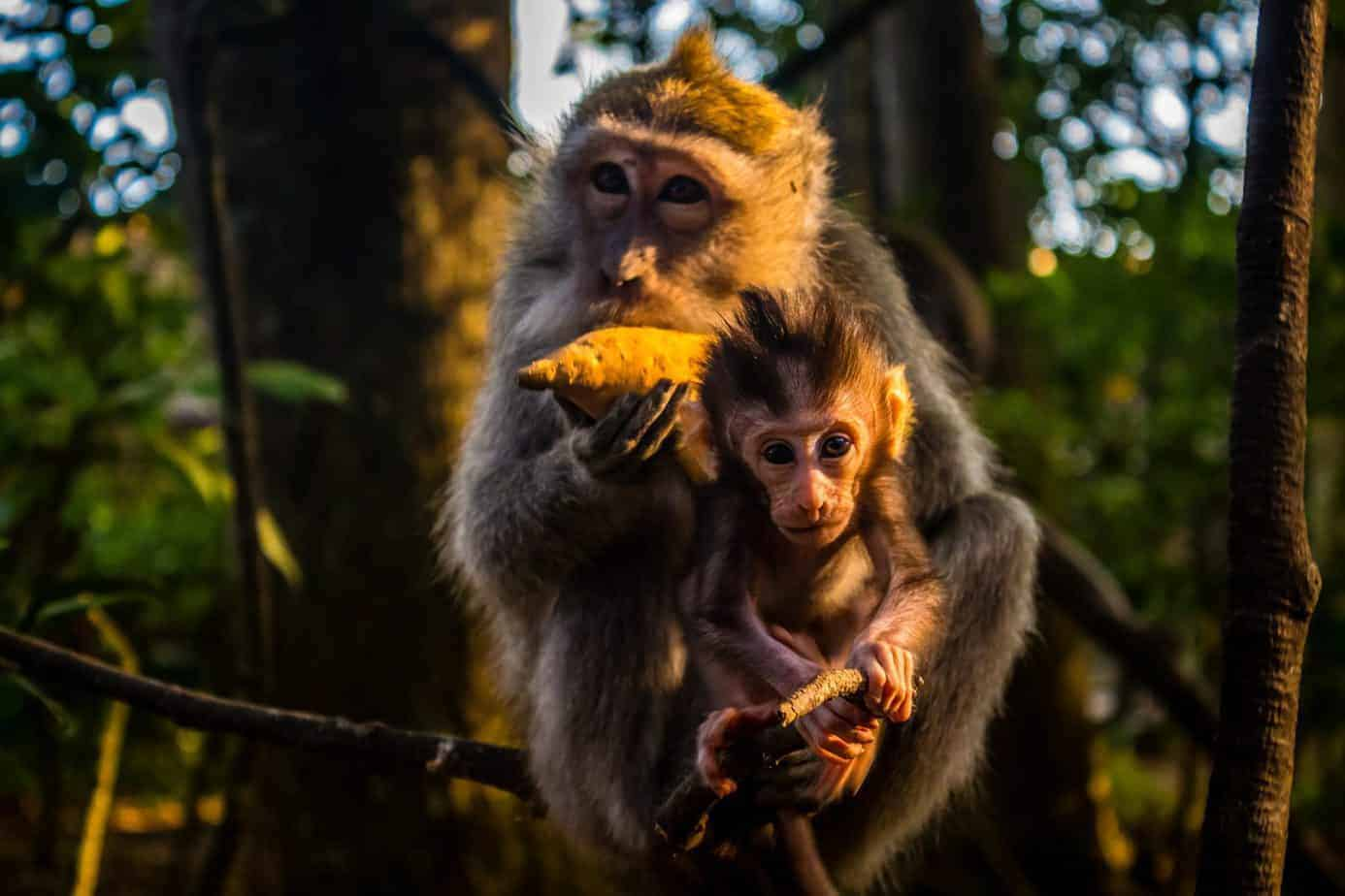 The Monkey Forest, Ubud, Bali.