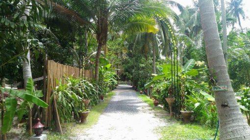 Garden, Koh Phangan