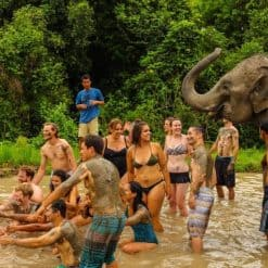 Travellers visit an elephant sanctuary in Northern Thailand