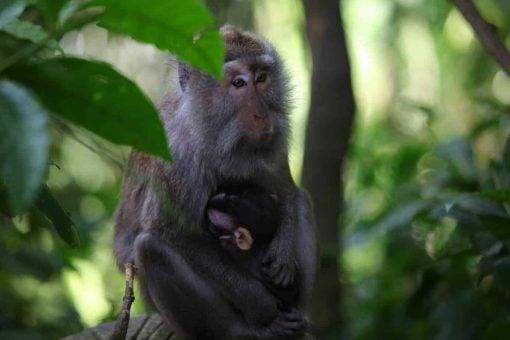 The Monkey Forest, Ubud, Bali.