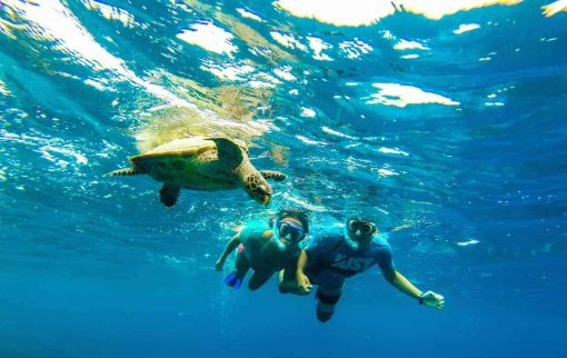 Snorkelling with turtles in the Philippines.