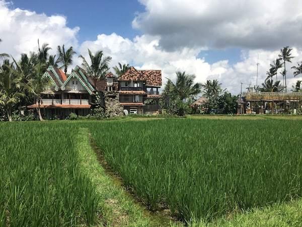 The beautiful rice fields of Ubud, Bali.
