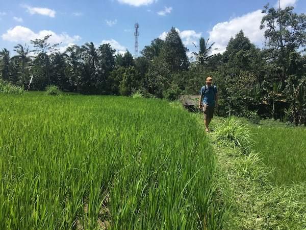 Walking through the lush green rice fields of Ubud, Bali.