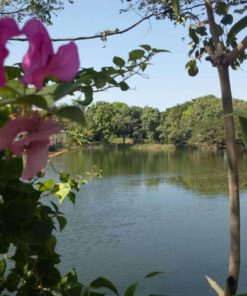 The lake at Bohemiaz Phnom Penh Resort.