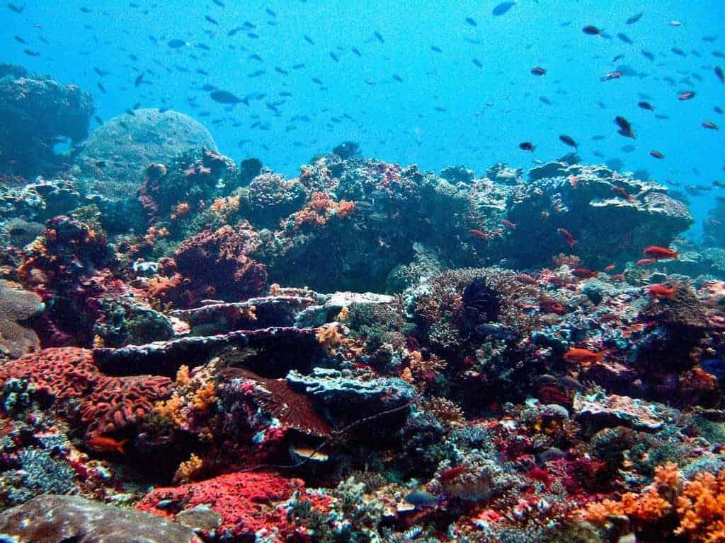 The coral reef at Nusa Lembongan