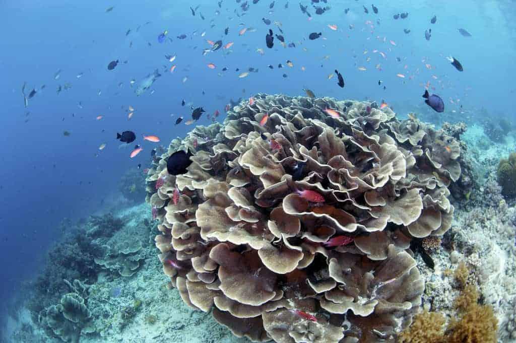 Sipidan Island, Malaysian Borneo
