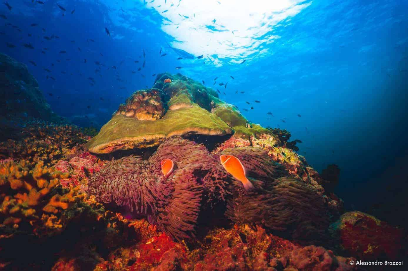 Fun dives discover local diving koh tao thailand - Dive in koh tao ...