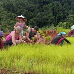 In the rice fields, Mae Wang, Chiang Mai