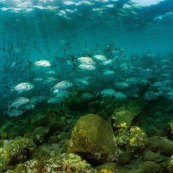 AquaMarine Bali