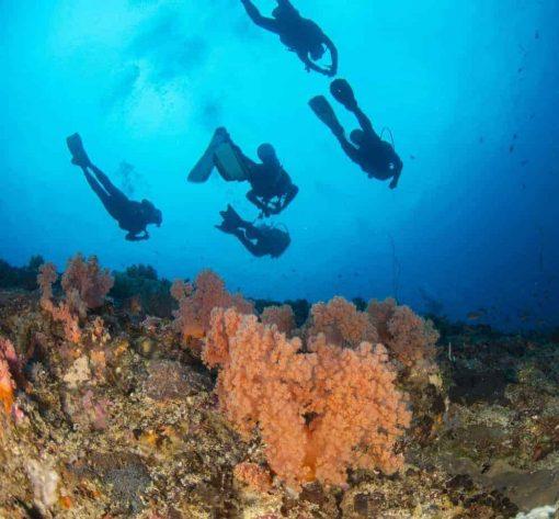 Diving with AquaMarine Bali