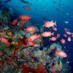 Komodo underwater life