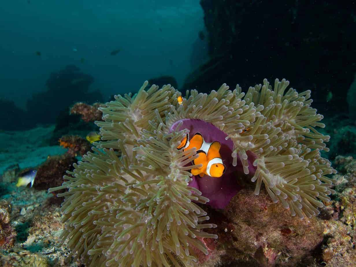 ... look what we found - Nemo!...