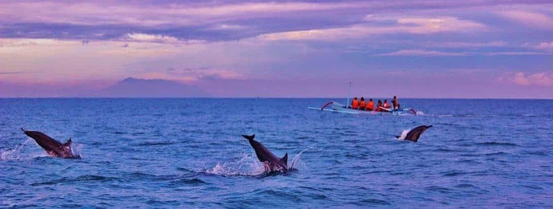 Dolphin spotting in Lovina Bali