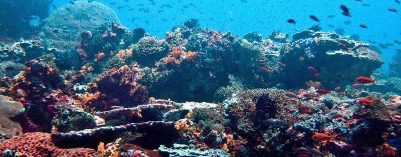 Coral Reef, Nusa Lembongan