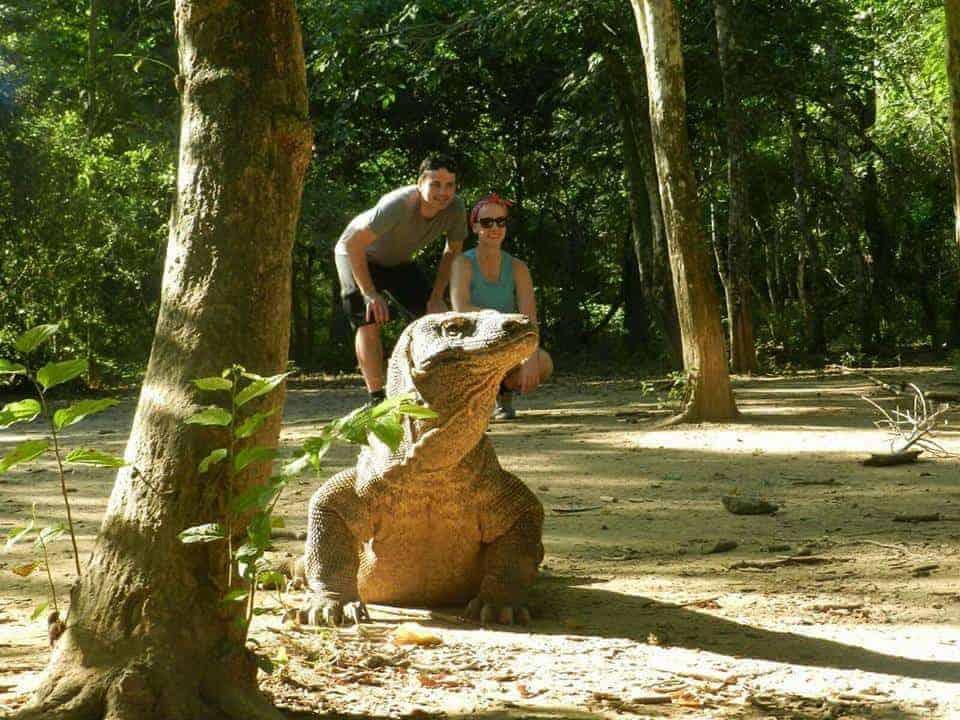 Komodo Dragons, Komodo, Indonesia