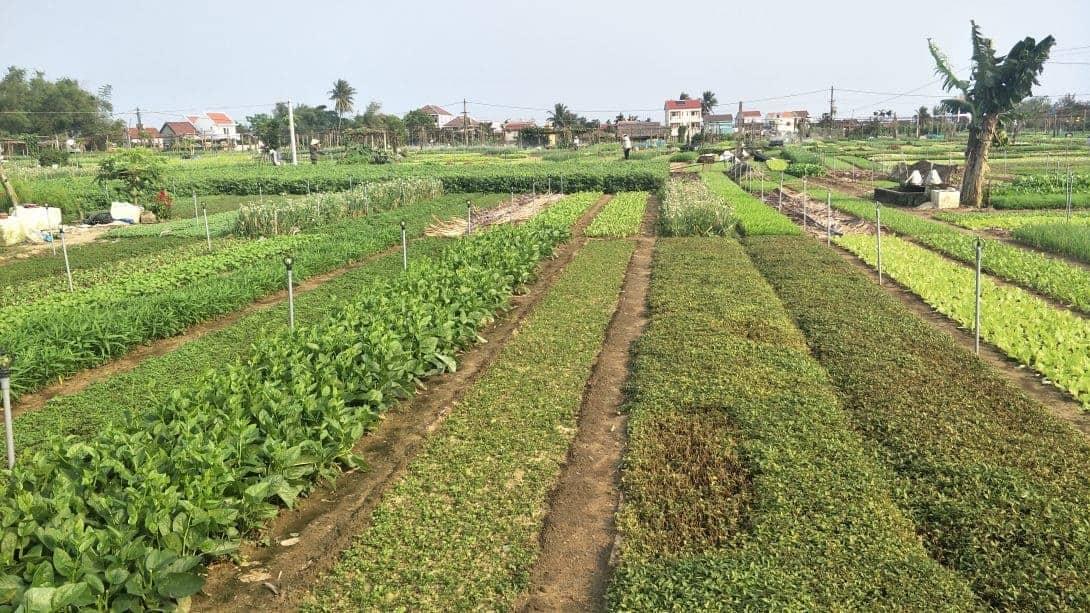 Tra Que Vegetable Garden