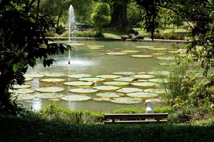 Bogor Botanical Gardens, Indonesia.