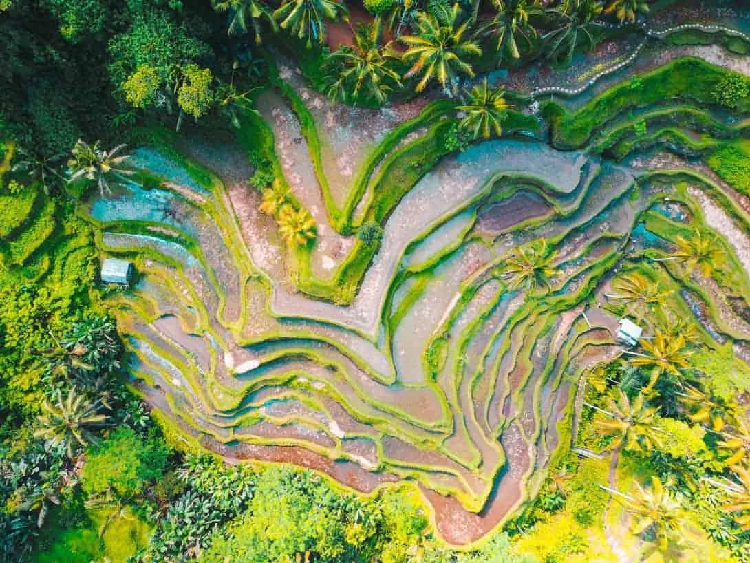 Rice Fields of Ubud, Bali